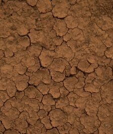 CCE analizeaza strategia UE de combatere a desertificarii