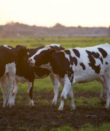 Modificari la subventiile crescatorilor de animale