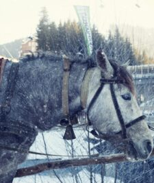 Protejarea animalelor in conditii de ninsori si viscol