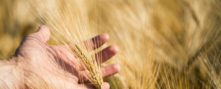 agricultura bio incurajata