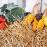 agricultura cu rezultate